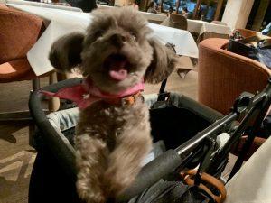 愛犬ロザリーの写真