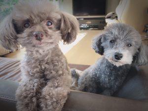 愛犬ロザリーとオスカルの2ショット